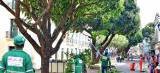 Prefeitura segue cronograma de ações paisagísticas na região do Centro Histórico de São Luís