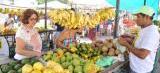 Feirinha São Luís fortalece ações para agricultor, artesão e cultura