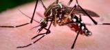 MA registra 107 municípios em situação de alerta ou risco para dengue, zika e chikungunya